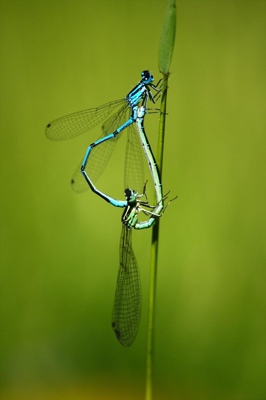 libellule, macro de nature, atelierphoto - céline Loie