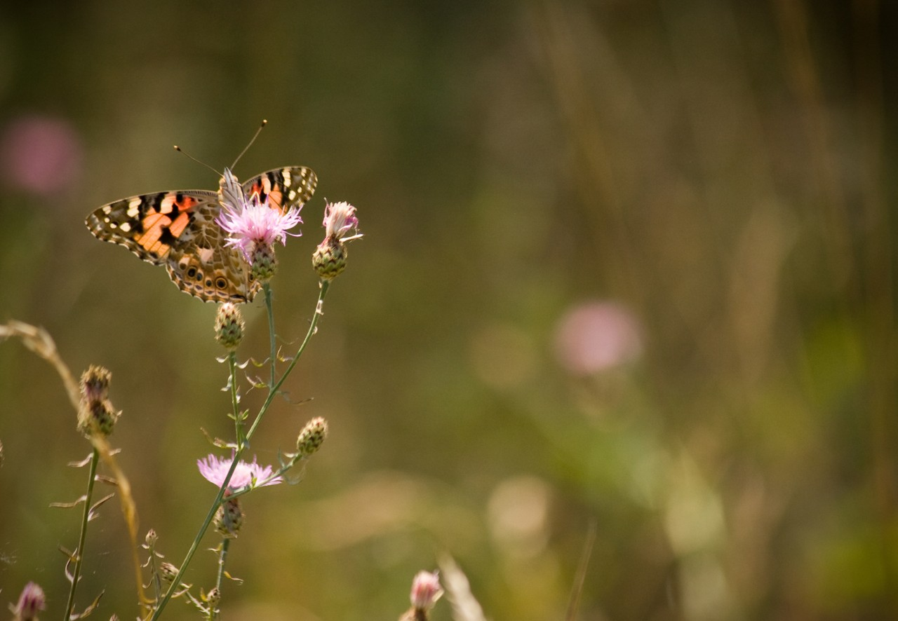 papillon, macro de nature, atelierphoto - céline Loie