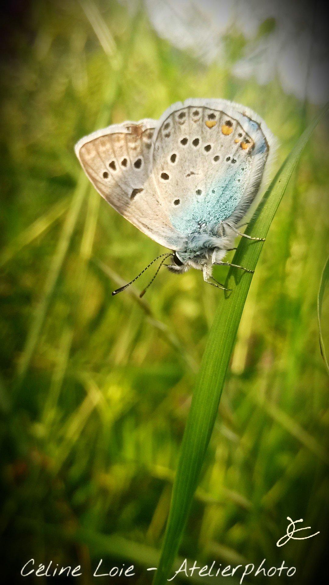 Papillon, macro de nature, Céline Loie, Atelierphoto.net